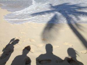 beach-palm-tree-shadow